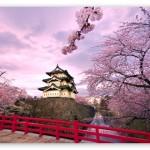 Cherry Blossums Garden